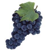виноградное домашнее вино